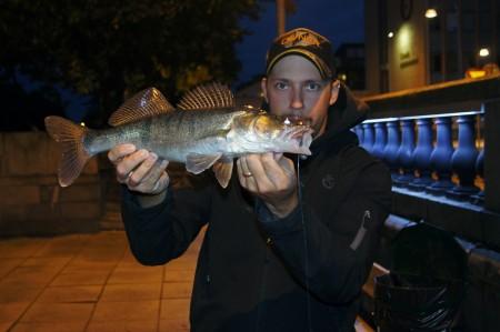 Fiske i Gavleån