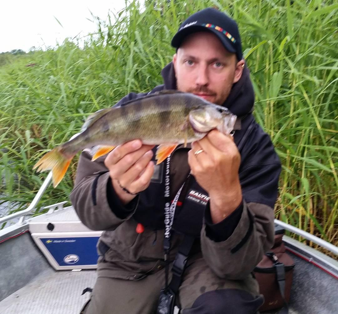 Nattens fiske med mathiazbrink brjade leverera abborrar vid frsta ljusethellip