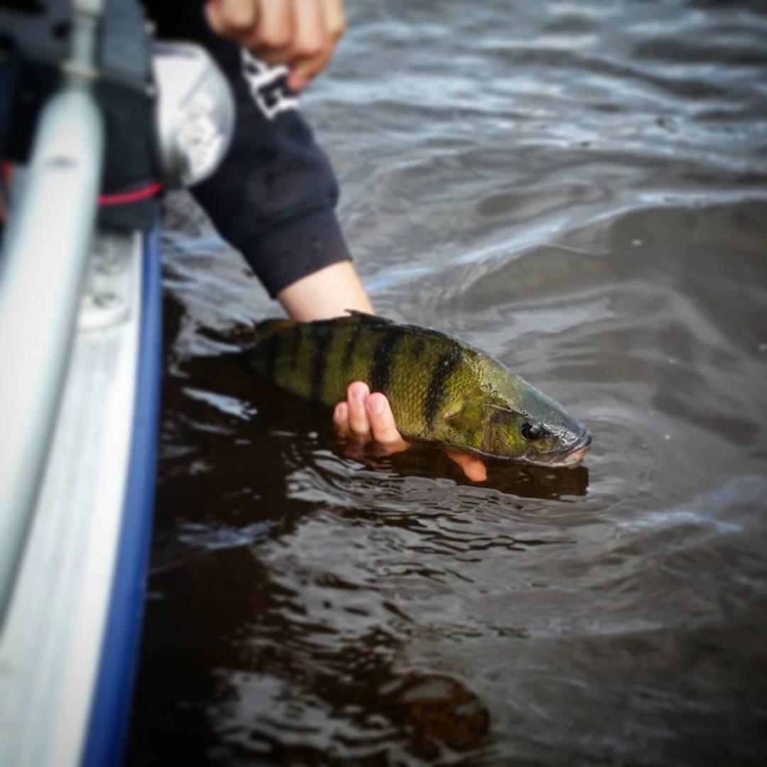 Kan nog vara bsta gonblicket med fisket nr fngsten frhellip